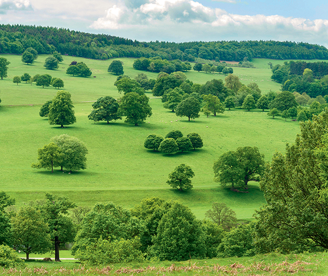 ETRKDM Landscaped trees and green fields of Chatsworth Park, Derbyshire, UK.